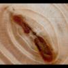 木が動いている!?木の断面を撮影した作品「WoodSwimmer」