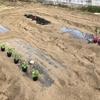 翌日、播種・定植を終えたころポツポツしだして自称家庭菜園的活動家はほくそ笑んだ