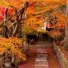 京都・亀岡 - 苗秀寺の敷紅葉