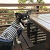 湘南・江ノ島にある 犬同伴OKのCafe Madu(カフェ・マディ)に行ってきました♪