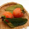 物撮り:熟し柿