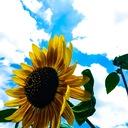 Sun~sun~Flower's