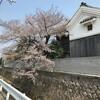 桜も開花し始めて、春がすぐそこまで来たようです。