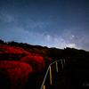 【天体撮影記 第90夜】 長崎県 長串山公園の満開クルメツツジと夏の天の川の撮影に挑戦