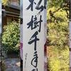 松樹、千年の翠