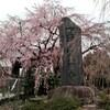 初めての桜へ