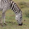 ケニアひとり旅⑦【ボートサファリ&三日月の島ウォーキングサファリ珍道中の巻】