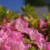 🌼徒歩にて花を撮影しました。都心でも案外撮影が出来ます。