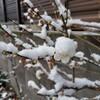 関東地方でも大雪