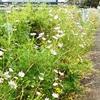 秋河原花壇止めるの立て看板
