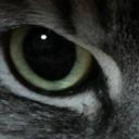 映画ソムリエを目指す猫