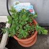 我が家の他の植物