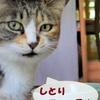 web「猫よろず相談」開催します