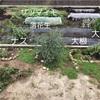 キャベツ、レタス植えて大根種まき【畑で家庭菜園2年目】