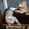 プランター菜園と 床の間で寝る猫ちゃー