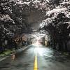 春の鎌倉や逗子を楽しむ休日
