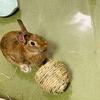ウサギのボール遊び?
