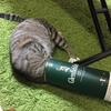 猫は人間のことを異様にデカい猫だと思っているらしいが本当だろうか