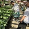 haneyasumeに野菜が植わりました