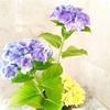 とっても簡単!紫陽花のヘアアクセサリー