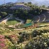 大平山山頂公園|10万株のつつじが咲き誇る天空の公園