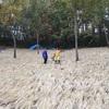 茗荷畑のワラ