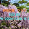 「EOS R5 + RF70-200㎜ F2.8L IS USM」で秋田の藤とツツジを