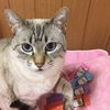 2月22日は猫の日♪我が家の猫たちが『おいシーバ宣伝隊』に立候補!