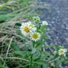 8月31日 花を撮ってきた