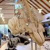 17日間の修行in北海道(5)シャチの骨格標本と間歇泉
