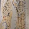 経絡を繋げるseriesその2『脇腹と背中を伸ばす』膀胱経と胆経の虚を取ります。クライマー・武術家・一般の方々にもオススメです!!