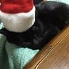 インバウンド需要、メリークリスマス!