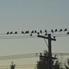 朝日を待ちわびる鳩たち