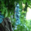 ジャングルに咲く宝石