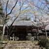 さらに桜・・・花の寺 勝持寺など