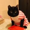【黒猫】舐め癖がついてしまった猫のハゲ治療【試行錯誤】
