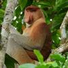 マレーシア ボルネオ島「キナバル山周辺」 自然と生き物を紹介