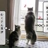 猫雑記 ~何気ない日常とすずめの気付き~
