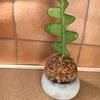 久しぶりにセメント植物系出品