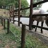 多摩動物公園のおすすめルート