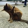 猫島の猫の写真