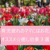 【育児】育児疲れのママにはお花がオススメ☆癒し効果3選