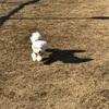 【お出かけ】伊豆ぐらんぱる公園・ドッグランとアスレチック