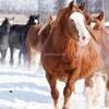 厳冬の十勝牧場で見る馬追い運動 2月末までやってます 今なら安い!