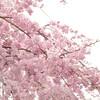 戸松西へ 2014春 里三連チャン!!素敵な思い出をありがとう!!
