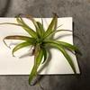 ダイソーで買ったスマホ用レンズの威力を植物撮影で検証してみました