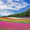 夏の北海道は逆に都民を試せるくらいに快適なんですよ?