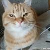 ちゅ~るの言葉に反応する猫