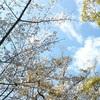 月組・夢現無双 新人公演感想 風間柚乃さんが魅せる若き剣豪活劇の鮮やかな見事さ