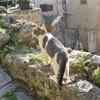 【一日一枚写真】コトルの案内猫【一眼レフ】